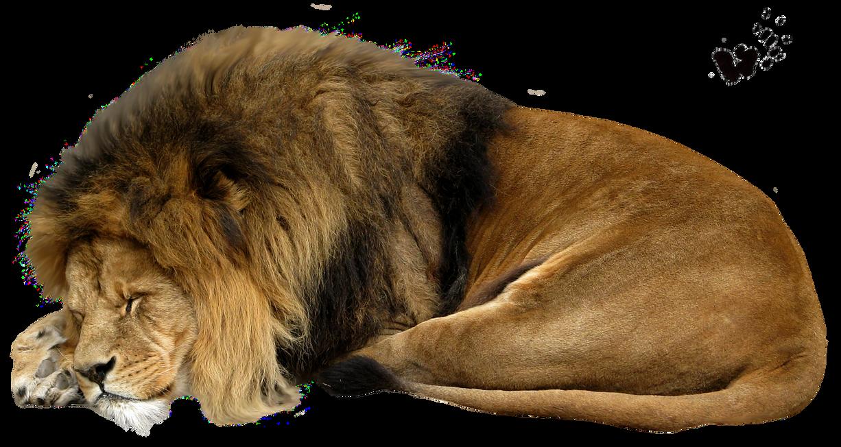 صور اسود سكرابز اسود صور اسود مفرغة png صور اسود cut_out_stock_png_13___sleeping_lion_by_momotte2stocks-d5ikagy.png