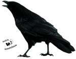 Cut-out stock PNG 17 - shouting crow by Momotte2stocks