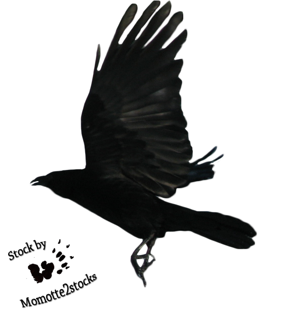 cutout stock png 18 flying crow by momotte2stocks on