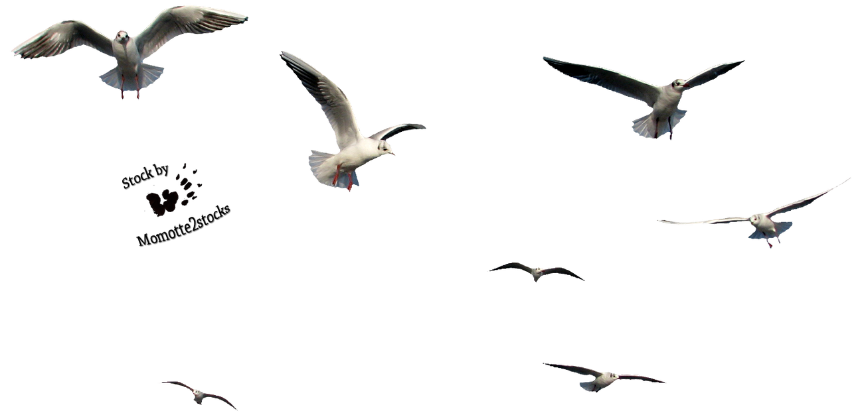 Flying bird gif transparent