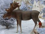 Various 50 - moose in snowy scene by Momotte2stocks