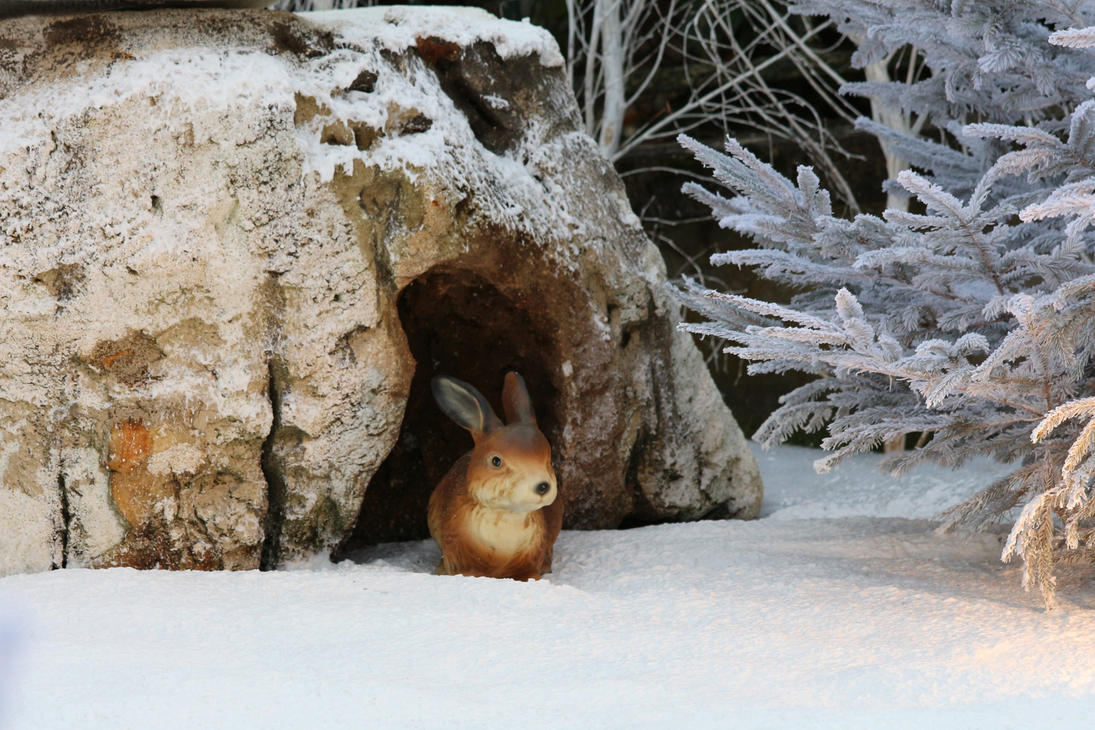 various 51 winter rabbit in his burrow by momotte2stocks. Black Bedroom Furniture Sets. Home Design Ideas