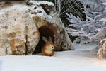 Various 51 - winter rabbit in his burrow by Momotte2stocks