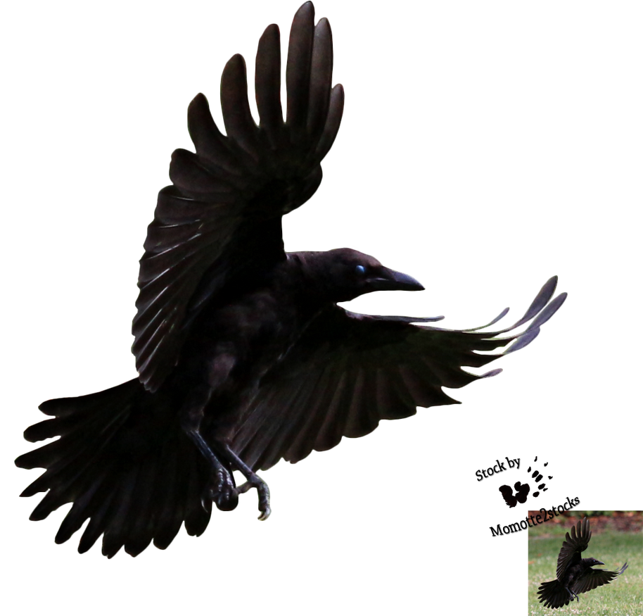 Cut-out stock PNG 80 - Flying young crow by Momotte2stocks ...