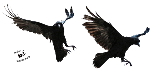 Cut-out stock PNG 127 - halloween pair of crows by Momotte2stocks