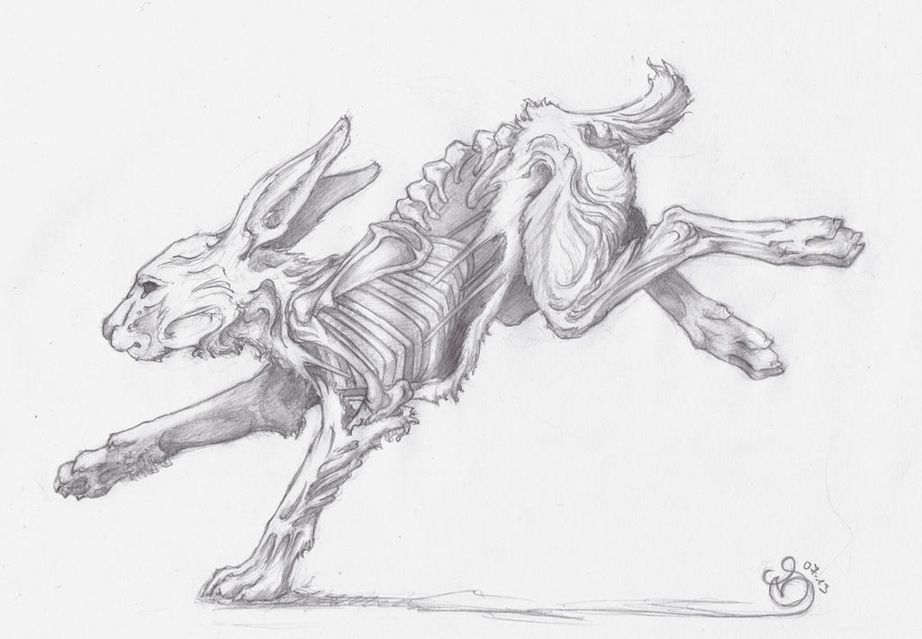 Hare running drawing - photo#15