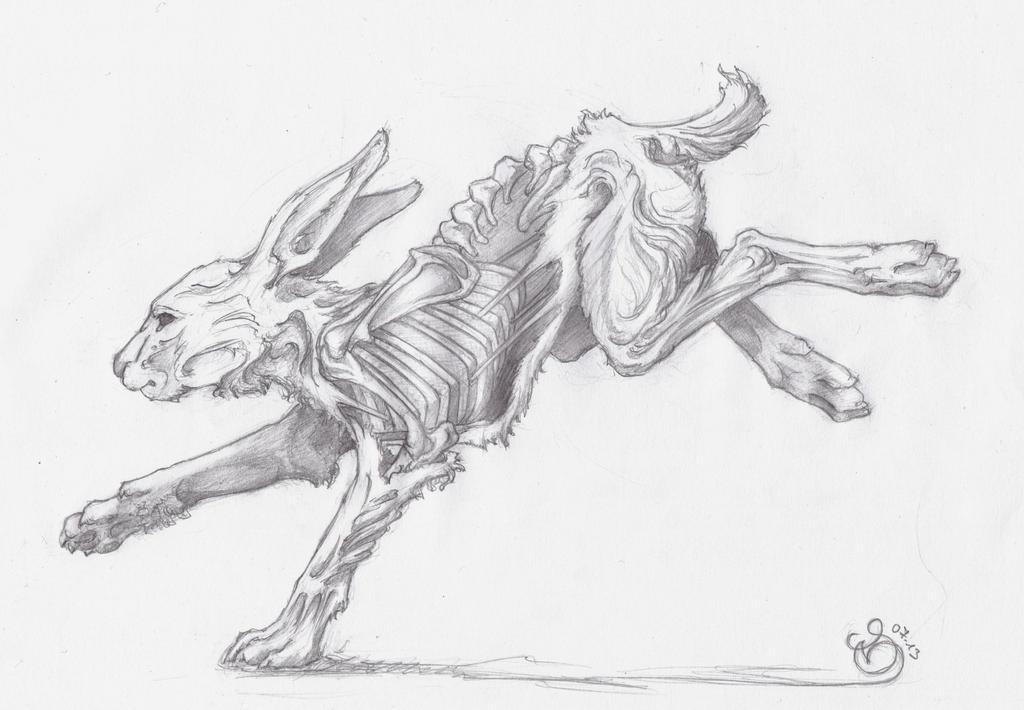 Running Rabbit by nekosaki88 on DeviantArt