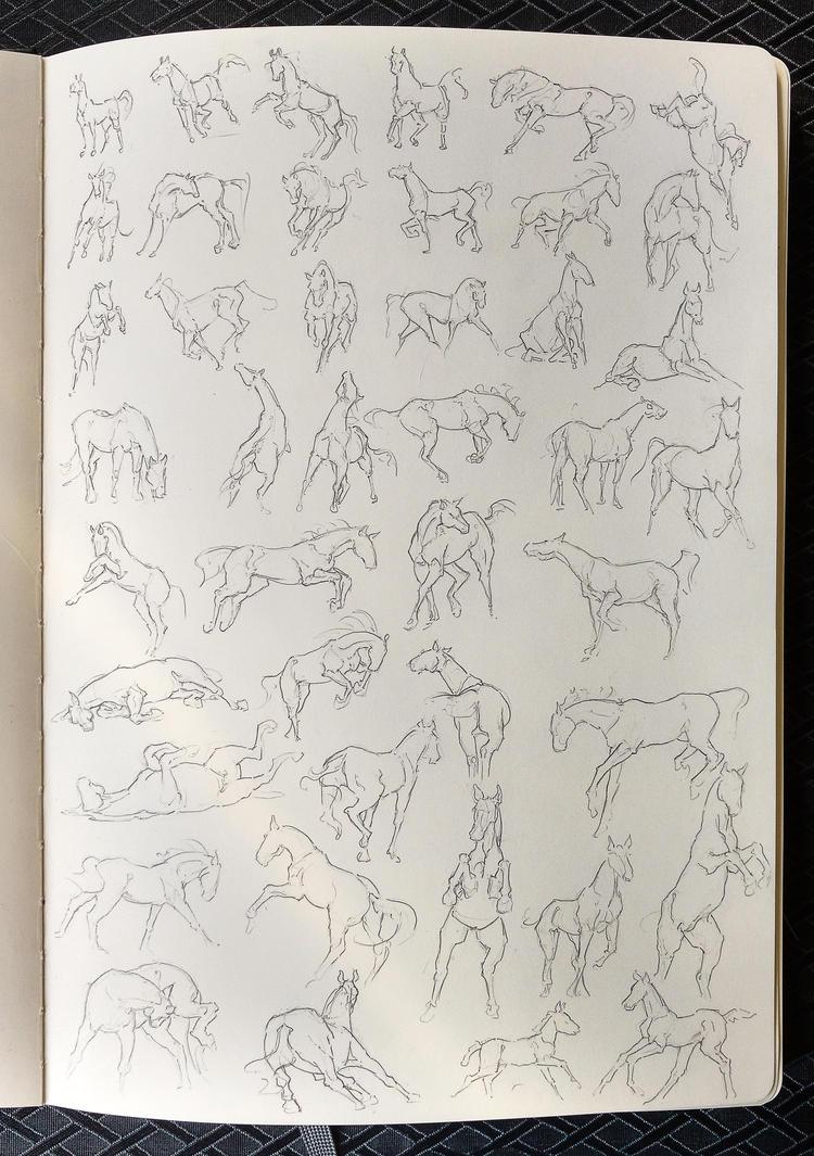 horse studies by nekosaki88