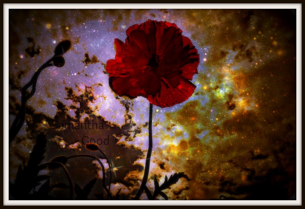 Poppy Galaxy by SBsStampAttack