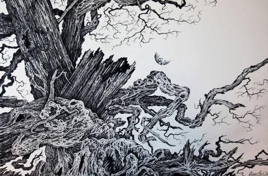 Oak and Moon III