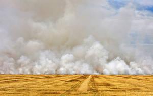 Sacraficial Harvest (WAB2806) by WayneBenedet