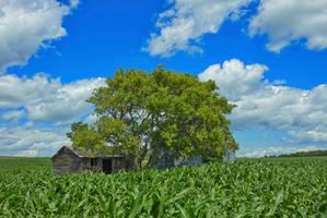 Cabin in The Corn (WAB7427)