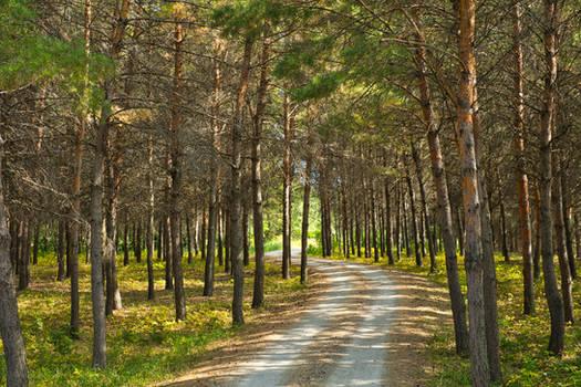 Trail of-Dreams (WAB4968)