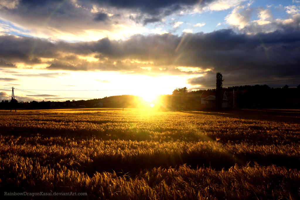 Sunset over a field by RainbowDragonKasai