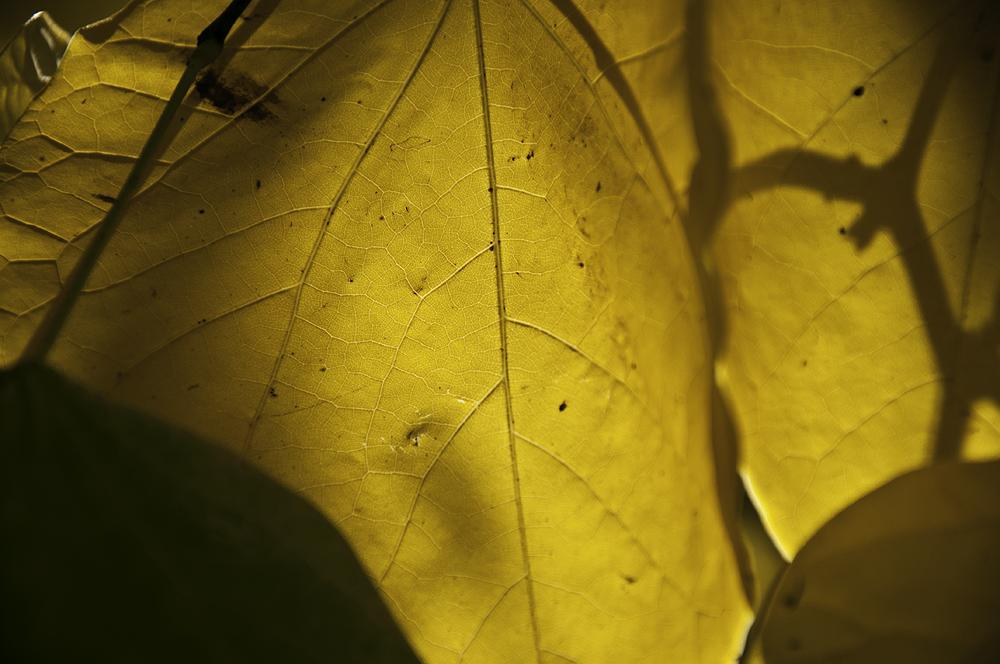 Fall by BeyondGlory