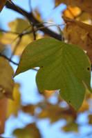 Autumn 2 by callmepassionate