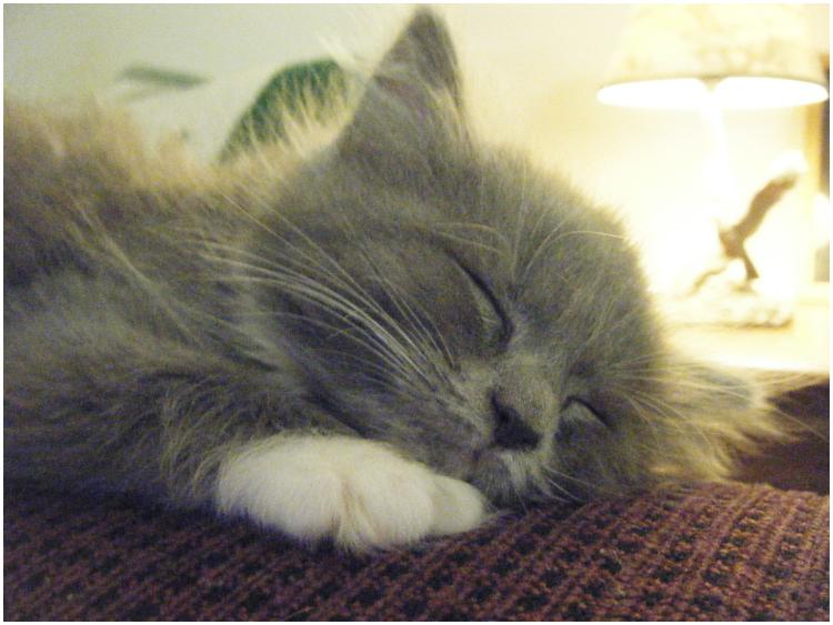 lady sleeping hard