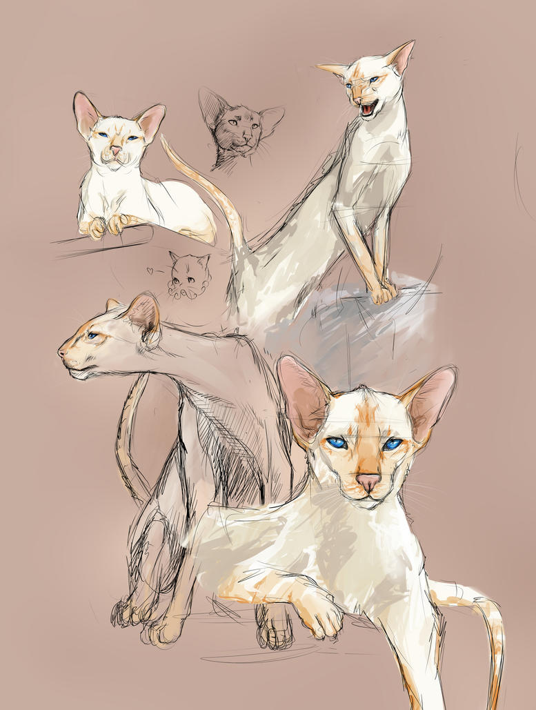 Cat sketches by Kamen-no-Hime-sama
