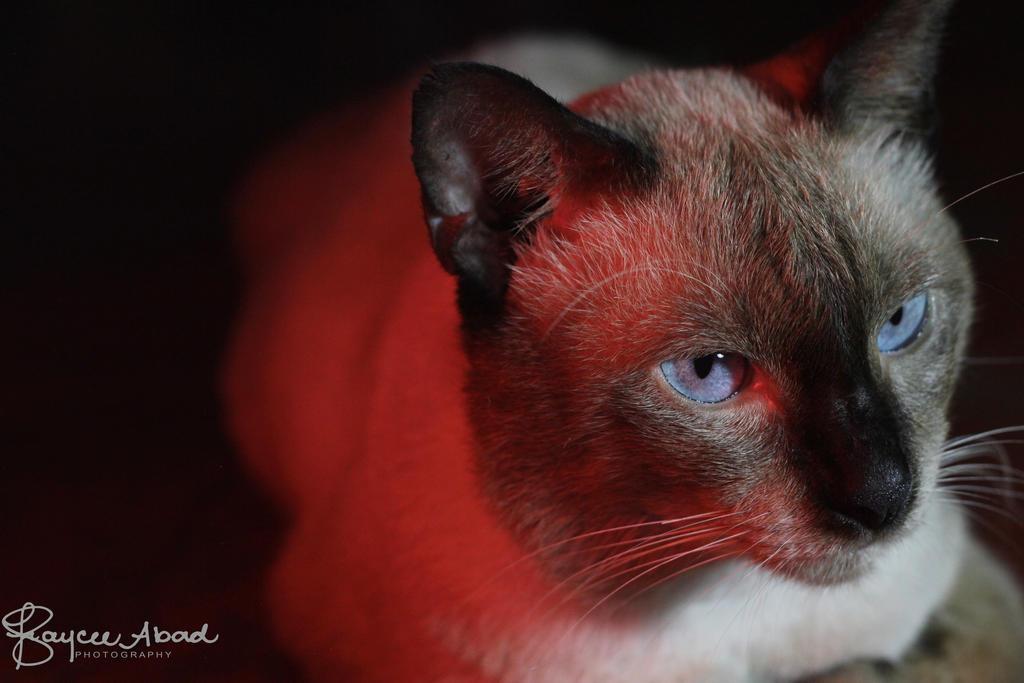 Shori the fat kitty by BloodyKaycee