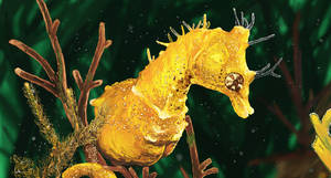 Yellow Seahorse by amyanimalover