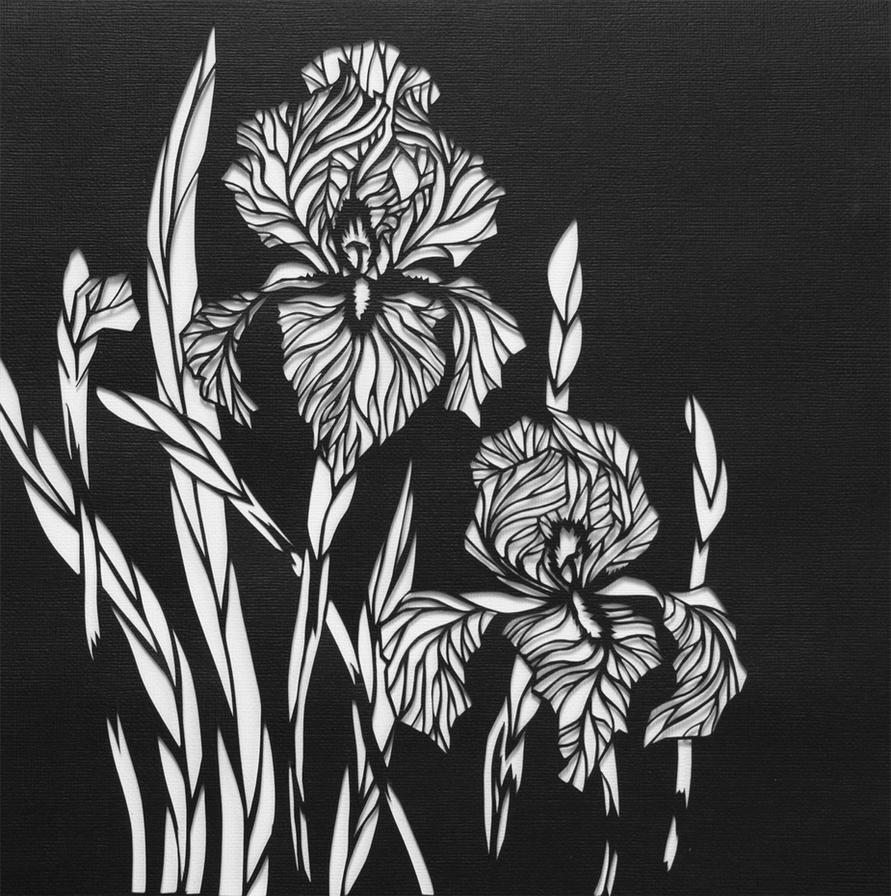 --irises-- by Ona-Elena