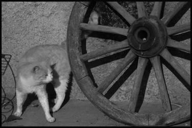 re cat by anti-d0te