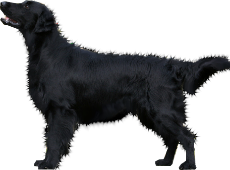Dog Png Clipart Black And White