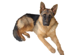 Gsd PNG