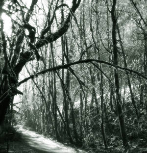 Forest Duotone