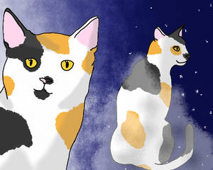Calico Twins - Finchclaw and Larkfoot