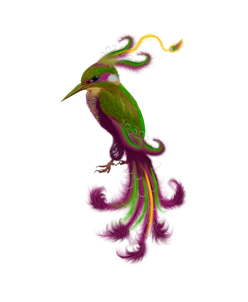 PNG stock bird