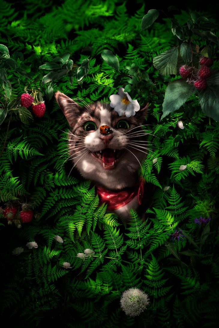 Cat adventures by jasminira