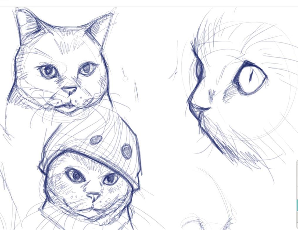 Cat Practice by Sebastian-Chow