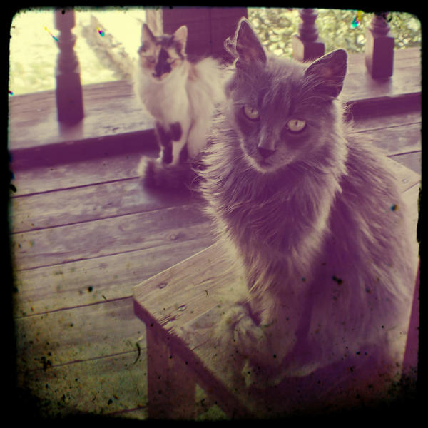 Cats by BobRock99