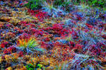 Psychedelic Nature part 2