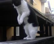 jump kitty jump by Darkdream-Vampire