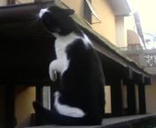 scratch meow by Darkdream-Vampire