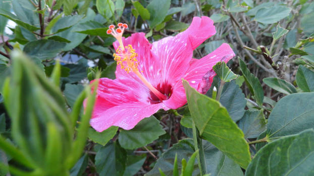 A Flower in Florida