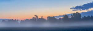 Morning Fog 3