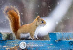 Red Squirrel 27 by Nini1965