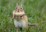 A Chipmunk with a Peanut