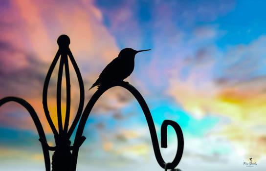A Silhouette of a Hummingbird at Sunrise