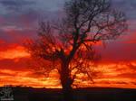 November sunrise 14
