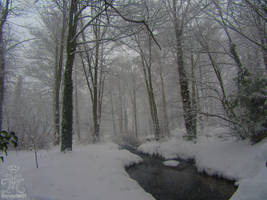 Winter's Arrival