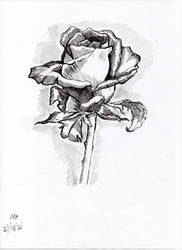 Inktober2021 - Rose