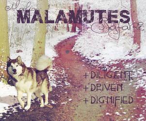 K-9 Malamutes by CompassLogic