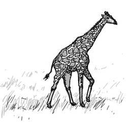 Giraffe :3 by ashitaka-sd