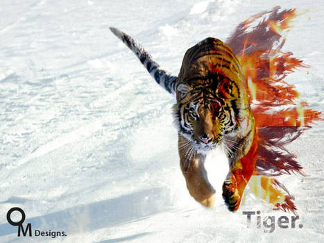 Tiger in fire