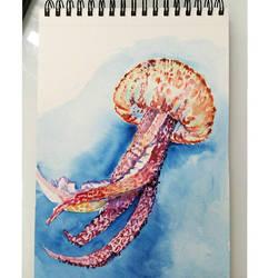 Sketch Jellyfish by Thalyndra