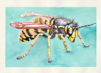 Wasp by Thalyndra